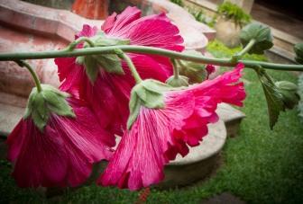 Courtyard Flower at La Casona de Antigua